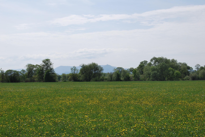La plaine du Ried avec vue sur le piémont des Vosges